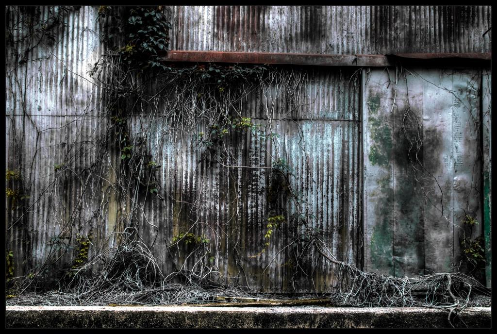 """Crawl"", a photograph by Robert Santafede"