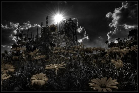 """Too Dark Park"", a photograph by Robert Santafede"